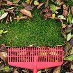 Как подготовить газон к зиме?
