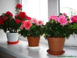 Цветы для теплых комнат