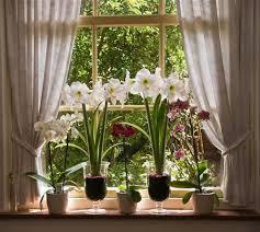 Цветы для южных комнат