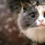Прививки кошкам: что, когда, зачем