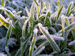 защита от заморозков
