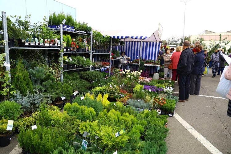 Тысяча растений на любой вкус: «Дачный сезон» для садоводов и огородников