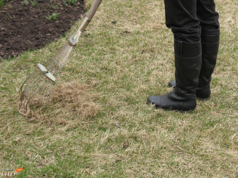 восстановление газона после зимы