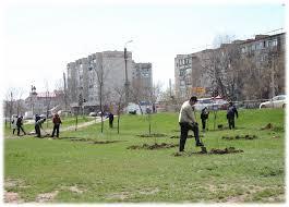 посадка деревьев в городе