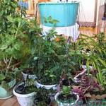 Как сделать автополив комнатных растений?