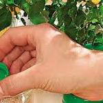Жидкие удобрения для растений и цветов
