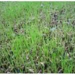 посев газона